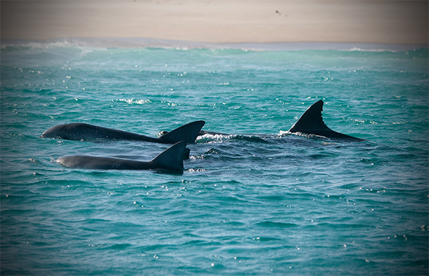 Last chance to save whale hotspot, Kangaroo Island