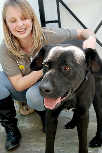 Mass dog and cat sterilisation project kicks off in Cape Town, South Africa