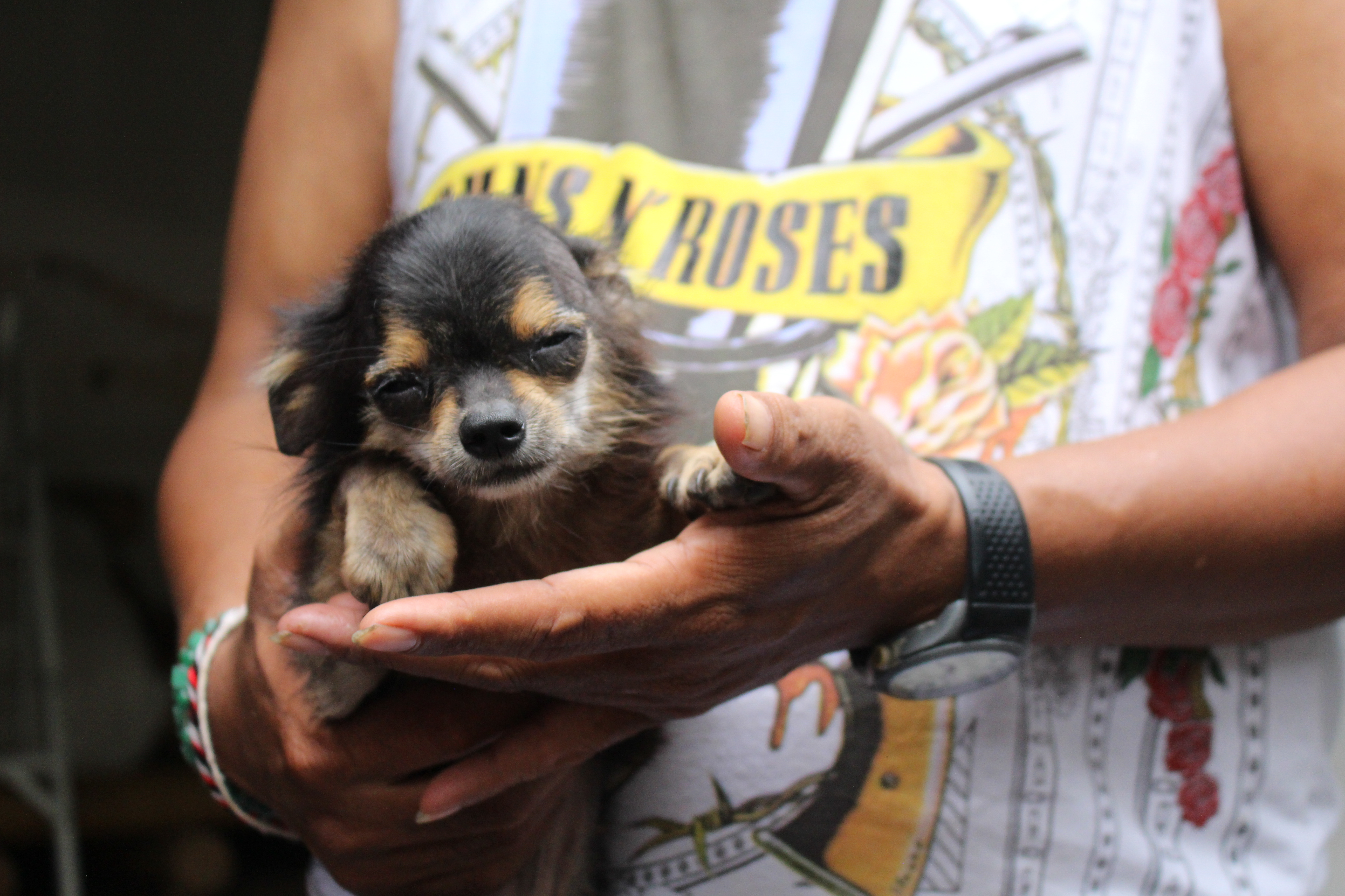 Meet Wira – a little dog with a big heart benefiting from our Bali dogs project