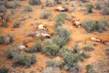 Massacre d'éléphants au Cameroun : retour des braconniers dans le parc national
