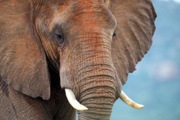 Contrary to popular belief, no ivory is needed for business