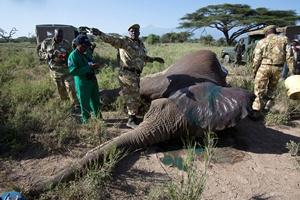 Om het gedrag van olifanten en de afstanden die ze afleggen beter te begrijpen,