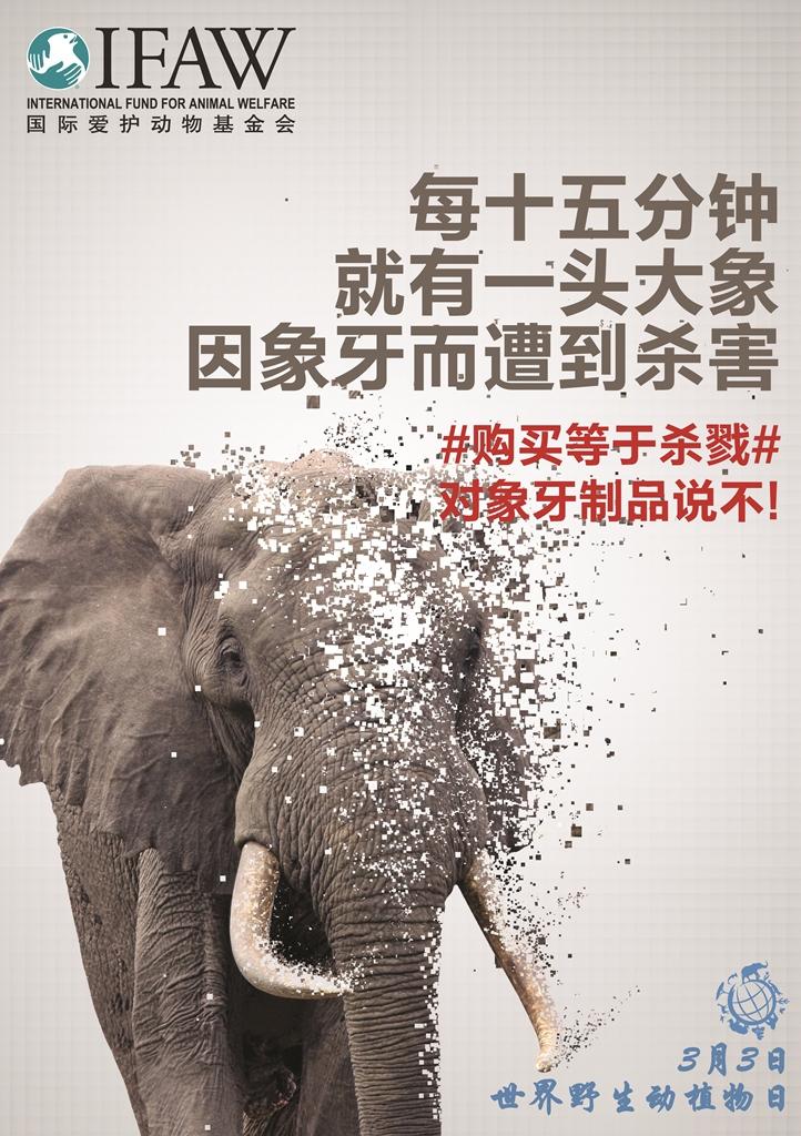 IFAW谴责野生动植物犯罪,呼吁全球行动起来保护野生动物
