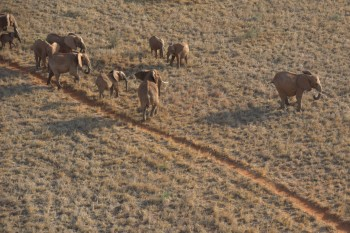 Ifaw's investment for years in Kenya is finally paying off by an elephant popula