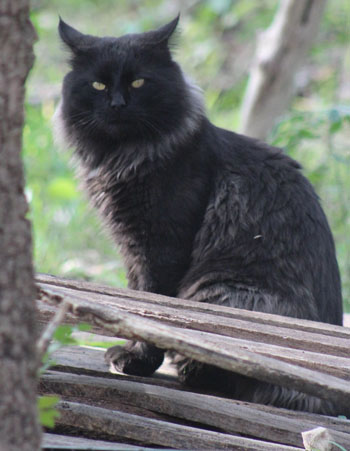 A feral Katrina refugee gets a new lease on life as a barn cat