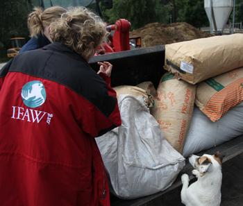 Das IFAW Team kümmert sich um Futter für die Tiere.