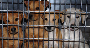 """South African Web Classifieds  """"Bite Back"""" against Online Pet Traders"""