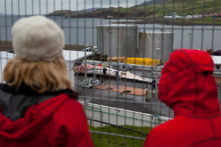 Anti-whaling protesters watch as the first fin whale of the season is flensed at a whaling station in Iceland.