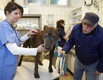 IFAW-Vet Alexandra knows how to treat all her different patients. Copyright: IFAW/R. Otzipka