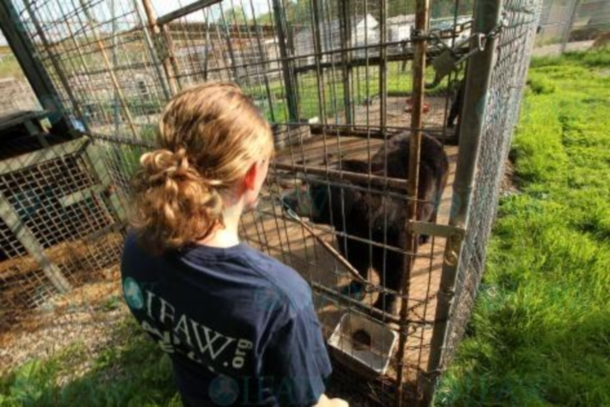 IFAW's Animal Rescue team work to save exotic animals from a failed animal sanctuary in upstate NY.