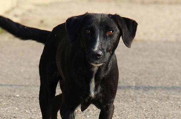 波斯尼亚 一只狗走在城市的街道上