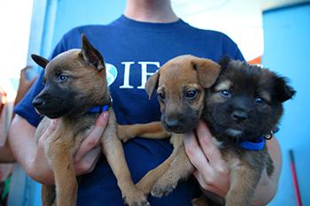 Foto's: IFAW's Noodhulpteam helpt honderden dieren die het slachtoffer werden va