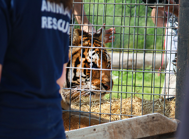 VIDEO: Animal rescue operations now complete from failed NY animal facility