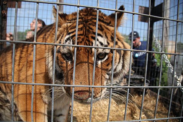 Vernachlässigte Wildtiere aus US-Privatzoo finden ein neues Zuhause