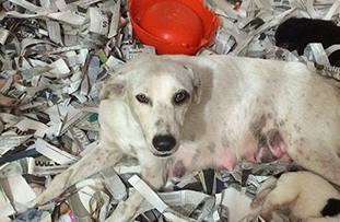 Spotlight Mexico: Lola the dog and her pups find safe haven in foster care