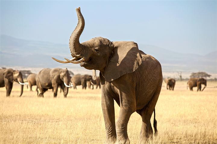 IFAW startet High-Tech-Projekt zum Schutz der Elefanten