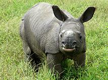 Helfen Sie, bedrohte Tiere nachhaltig zu schützen.