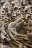 Hong Kong seizes 7.2 tonnes of elephant ivory