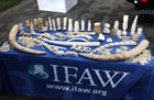 archive photo © IFAW