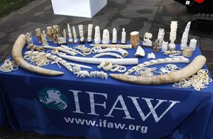 IFAW/David Parry/PA