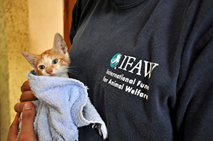 World Cat Day: no need to expel Kitty