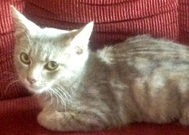 IFAW ERNs' care give feral cats like Lazarus a new lease on life.