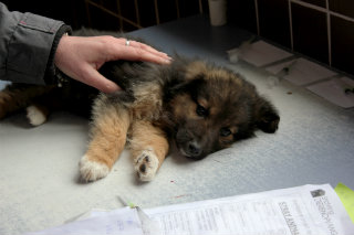 One of the many roaming dogs found on the streets of Bosnia.