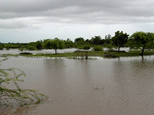 Malawi Floods – IFAW Relief Effort to Save Thousands of  Stranded Animals