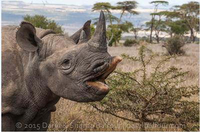 Better security, not dehorning, the answer to protecting rhino