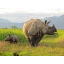 CITES Parties Reject Swaziland Request to Trade in White Rhino Horn
