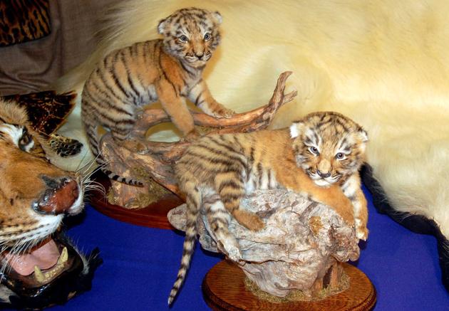 Wanted – Dead or Alive: Aufdeckung des Online-Handels mit Wildtieren