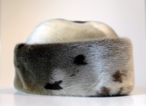 Robbenprodukte bleiben in der EU verboten