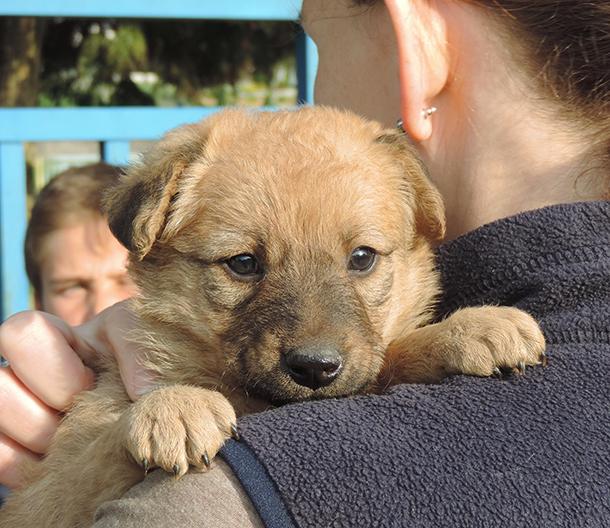 Journal de bord : Deux jours en compagnie des chiens errants en Bosnie