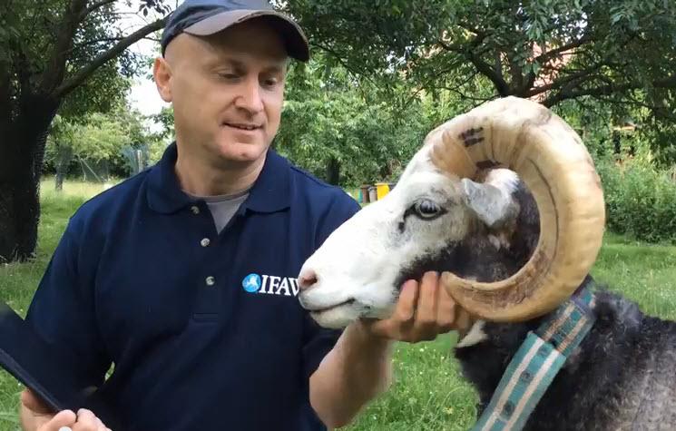Beschützer der Schafe