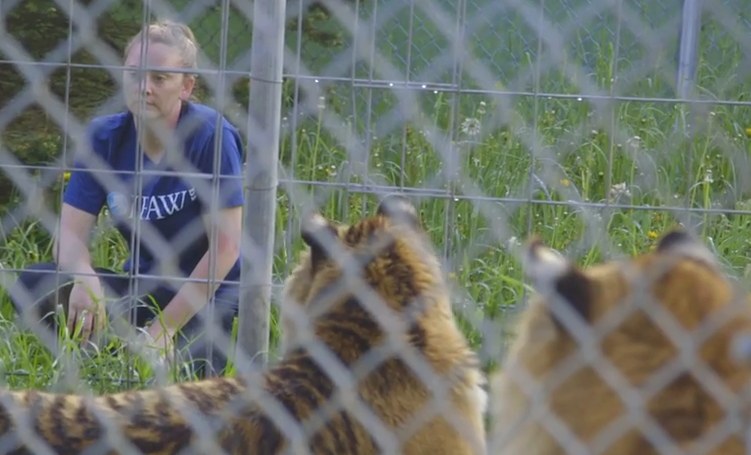 "VIDEO: Binge watch ""Seized"", gripping 5 episode NY animal seizure series"