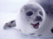 Save seals. End the commercial seal hunt