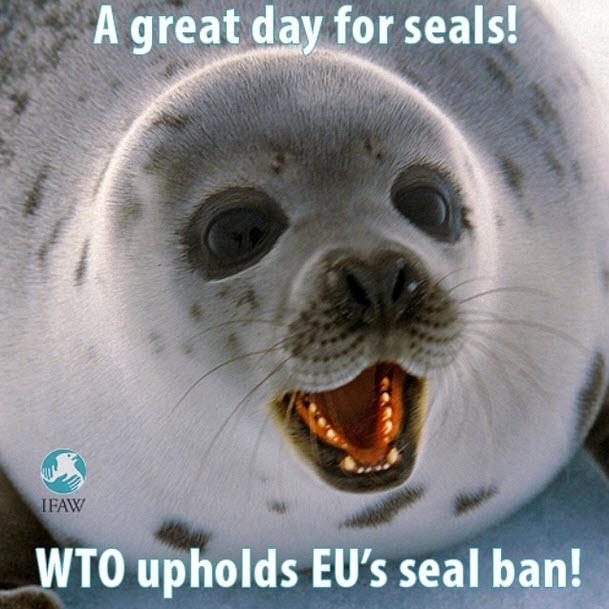 WTO hält am EU-Handelsverbot für Robbenerzeugnisse fest