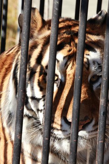 """Das IFAW-Team fordert Regierungen auf, ihre Entscheidungen gemäß dem """"Vorsorgeprinzip"""" zu treffen und stets das Wohl der Wildtiere zu berücksichtigen."""