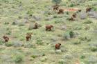 Determining Elephant Populations in Tsavo
