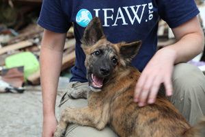 IFAW kickstarts vaccination campaign  and food relief for animals in the Philipp