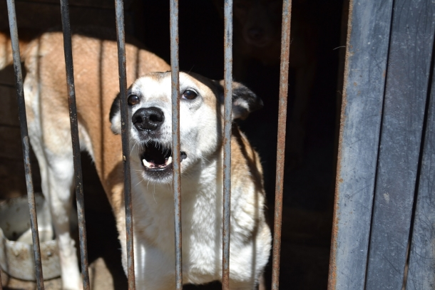 More than 900 dogs are being cared for at the Pif shelter in Donetsk, Ukraine.
