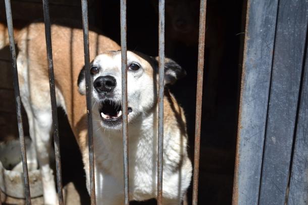 """Mehr als 900 Hunde werden im Tierheim """"PIF"""" in Donetsk in der Ukraine versorgt."""