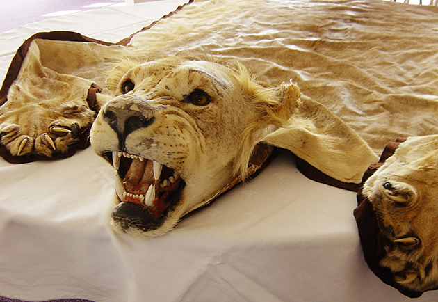 World Wildlife Day, an occasion to denounce wildlife crime