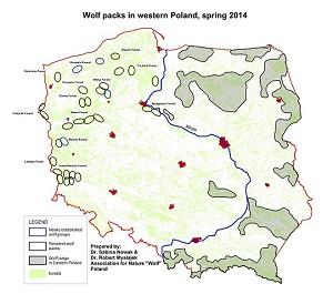 """Verbreitung der Wolfsvorkommen in Westpolen. (c) AfN """"Wolf"""""""