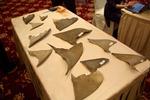 Voorbeelden van verschillende soorten haaienvinnen