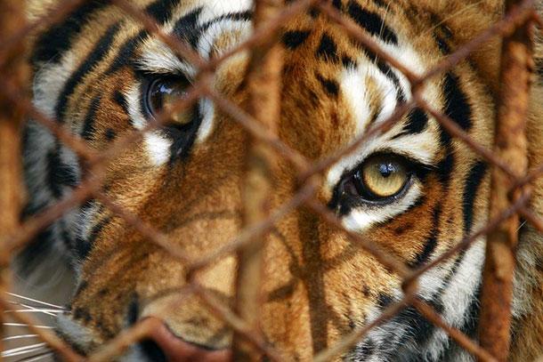 Chinas Gesetzgeber will den Kauf und Konsum von Produkten gefährdeter Tierarten