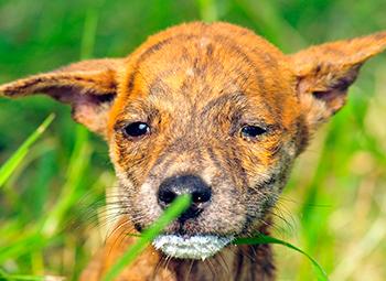 Der kleine Mambo genießt einen Spaziergang im grünen Gras. © IFAW-COP.