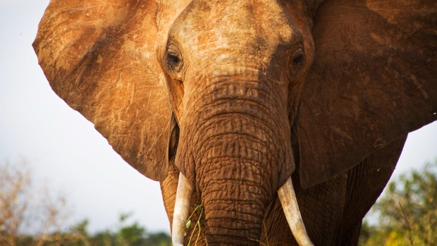Opinion: Elephants never forget – let's not forget about them