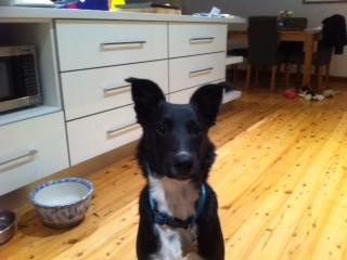 Bailey McCrea – the rescue dog