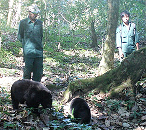 Six hand-reared bears are growing up and growing wild in Northeast India